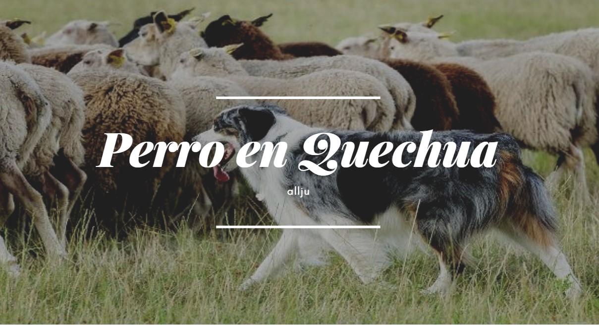 ¿Cómo se dice perro en quechua?