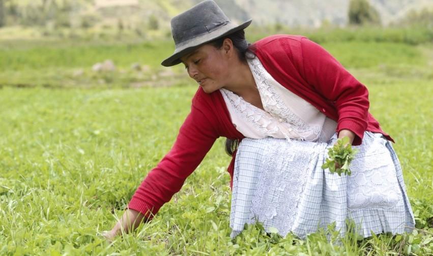 Verbos en quechua